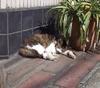Cat080311