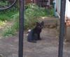 Cat090520_1