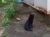 Cat090520_2
