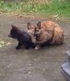 Cat090524_1