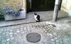 Cat070515_1