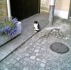 Cat070515_2